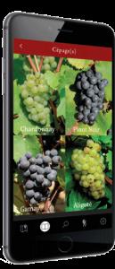 Pinot-Chardonnay-climavinea